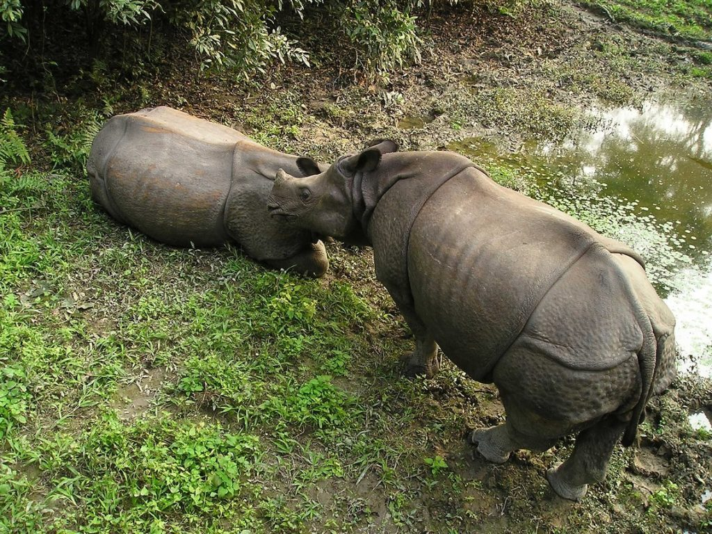 rhino chitwan national park image from pixabay